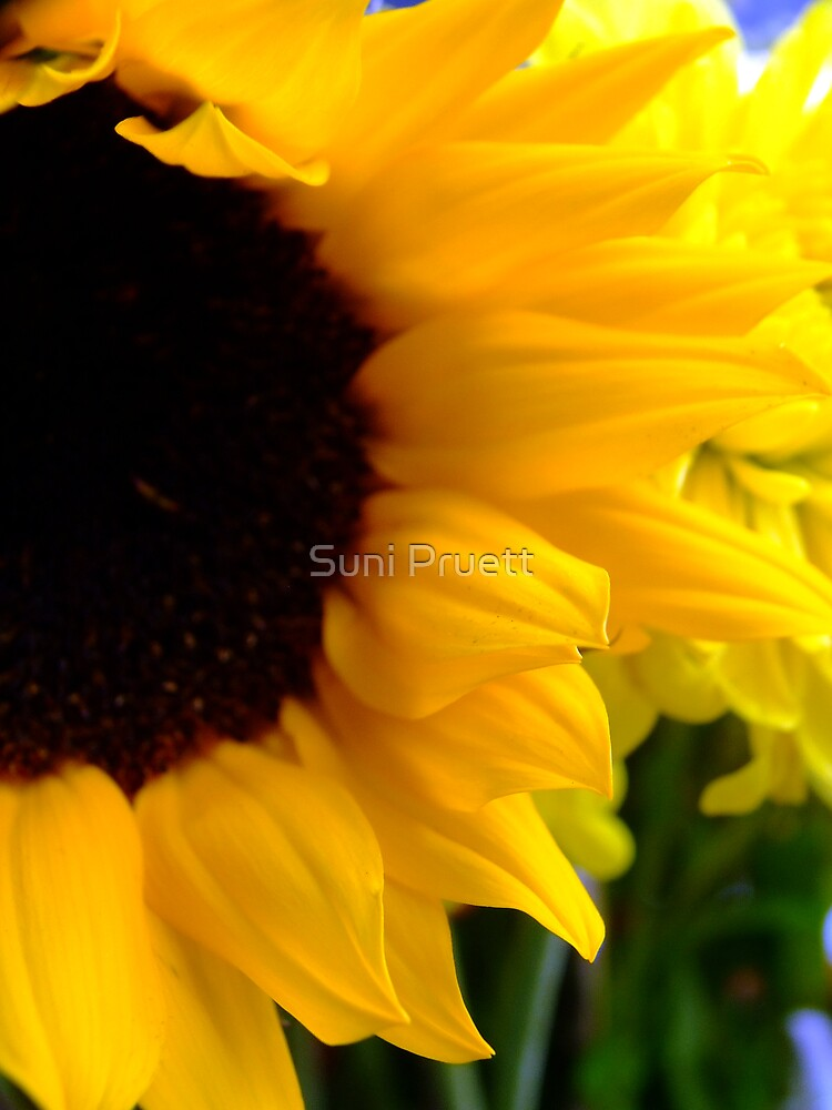 Sunflower by Suni Pruett
