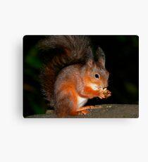 Squirrel Feeding 2 Canvas Print