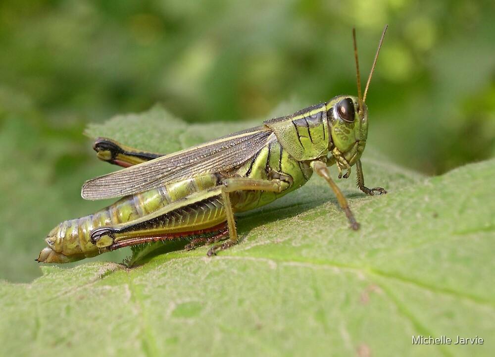 Grasshopper by Michelle Jarvie