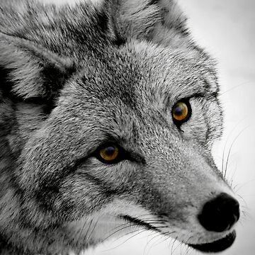 Wicked Stare (BW) by lobo2006