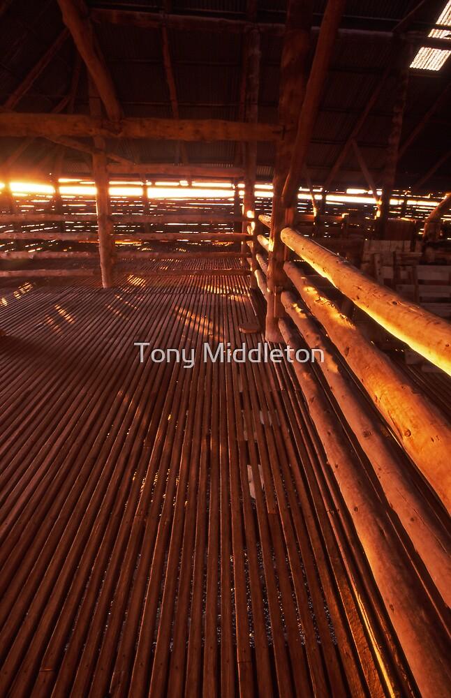 morning light - Old Mungo shearing shed, NSW. by Tony Middleton