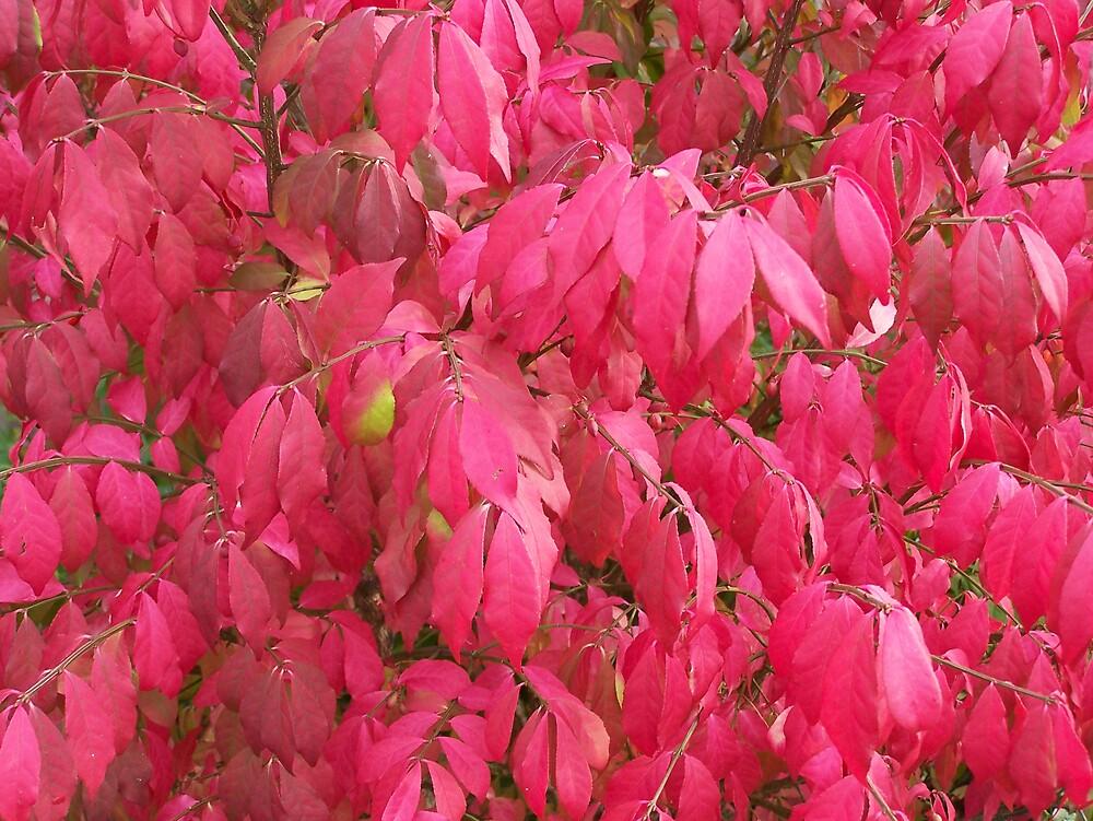 Red Leaf by Gene Cyr