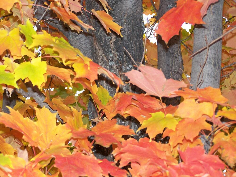 Bright Leaves by Gene Cyr
