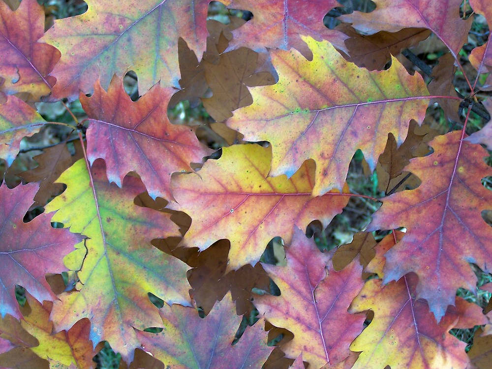 Oak Changes by Gene Cyr