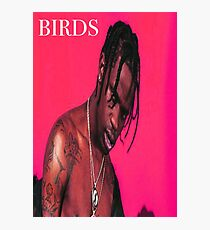 Birds in the trap Photographic Print