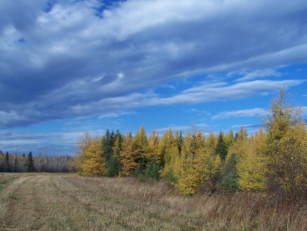 Clouds Over Field by Gene Cyr