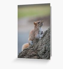 Sciurus Carolinensis - Eastern Gray Squirrel - Orange Variation | Flushing, New York Greeting Card
