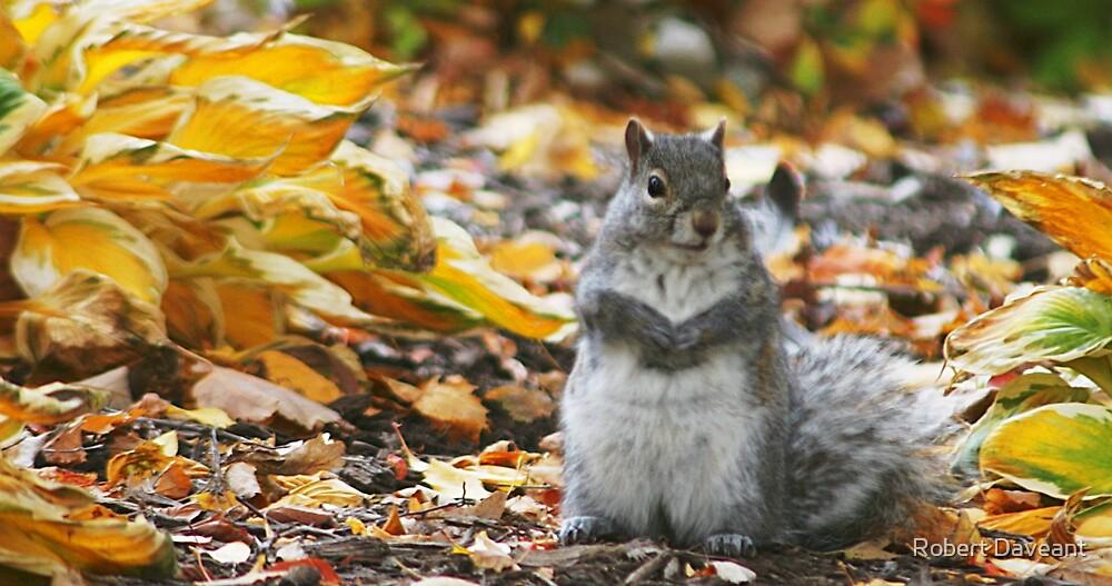 Squirrel by Robert Daveant