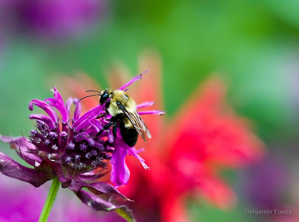 Beeeutiful colors..... by Benjamin Young