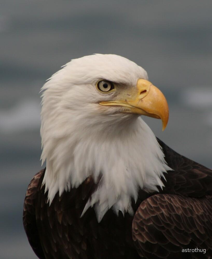 Eagle Head by astrothug