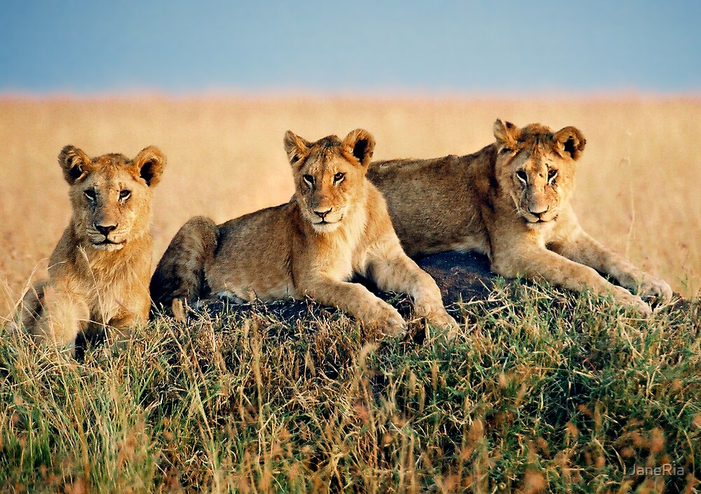 Lion Cubs by JaneRia