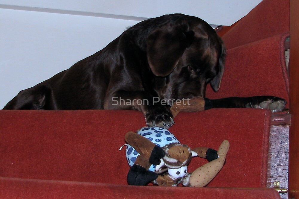 Bear and his toy by Sharon Perrett