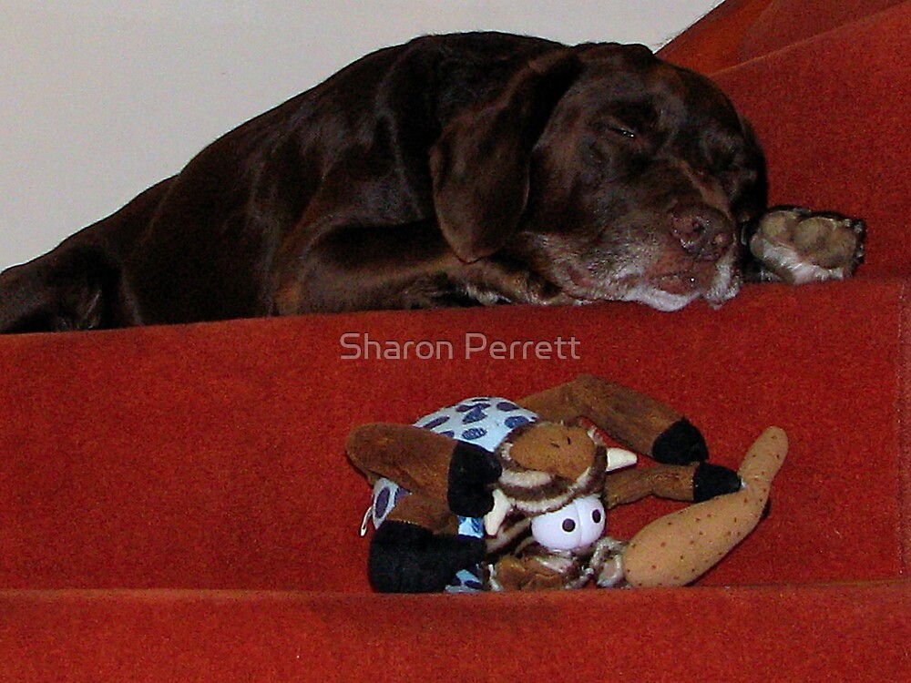 Worn Out Bear by Sharon Perrett