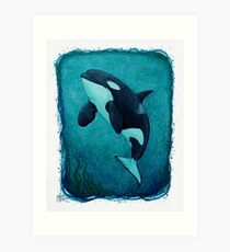"""The Matriarch"" by Amber Marine ~ killer whale / orca watercolor painting, (J2 Granny) art © 2016 Art Print"