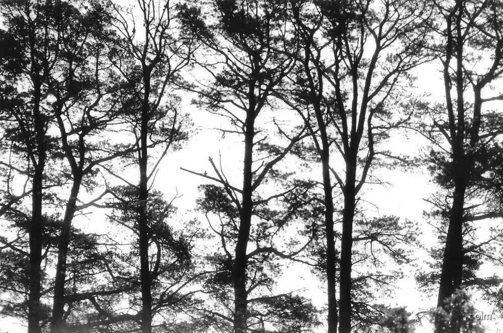 Trees by colm