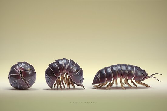 Interesting facts about rollie-pollies.			Interesting facts about rollie-pollies.