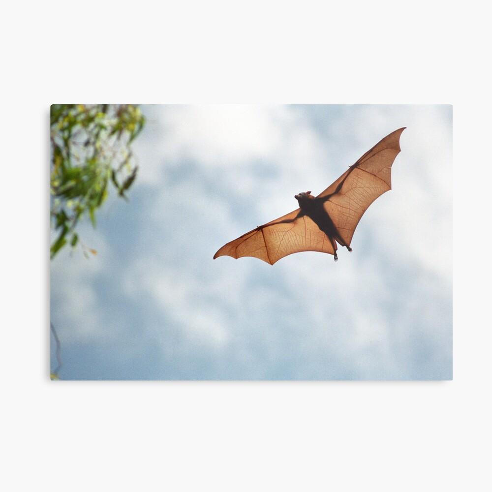 Fruit Bat Metallbild