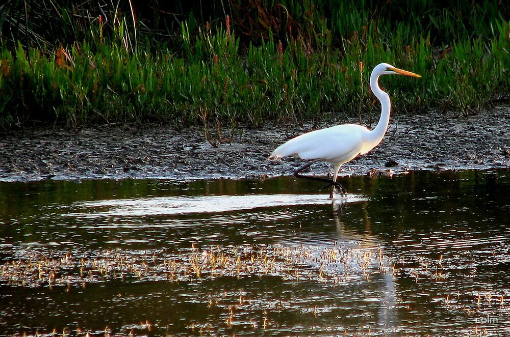 White Crane by colm