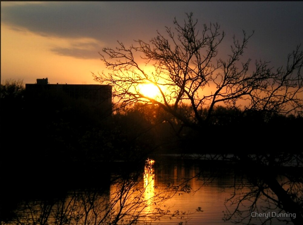sunset in the trees by Cheryl Dunning