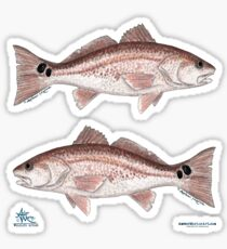 """Redfish"" by Amber Marine ~ watercolor fish art, © 2013 Sticker"