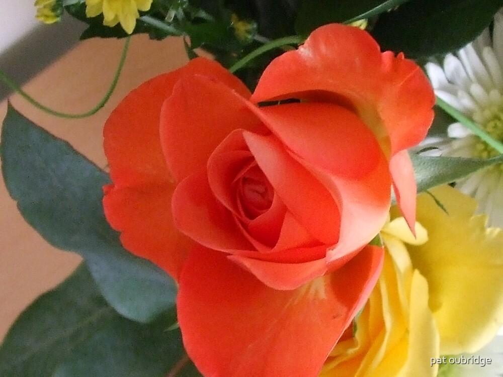 Orange Rose by pat oubridge