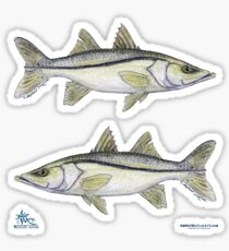 Snook ~ watercolor fish art by Amber Marine Sticker
