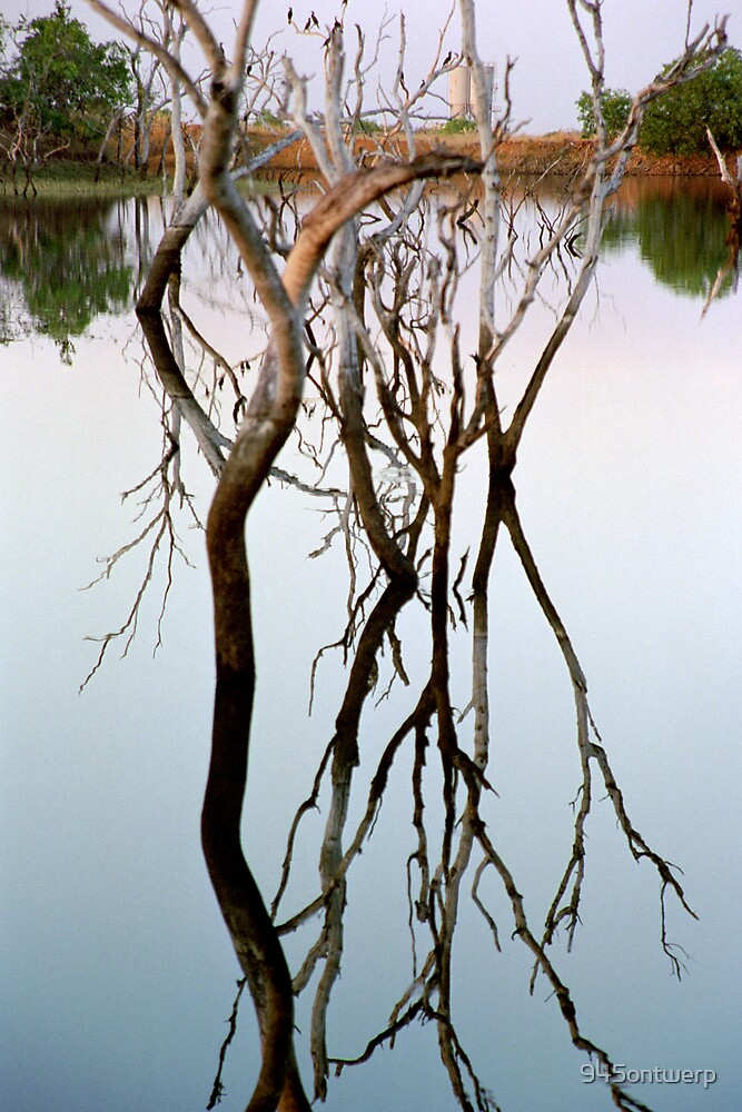 Tree reflection by 945ontwerp
