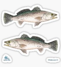 """Spotted Seatrout"" by Amber Marine ~ watercolor fish art, © 2013 Sticker"