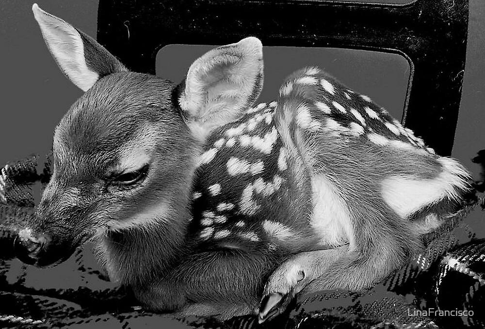 Deer  by LinaFrancisco