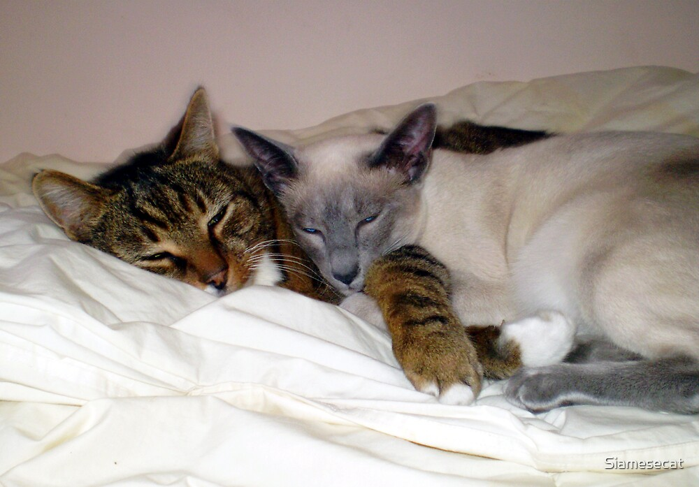 Together by Siamesecat