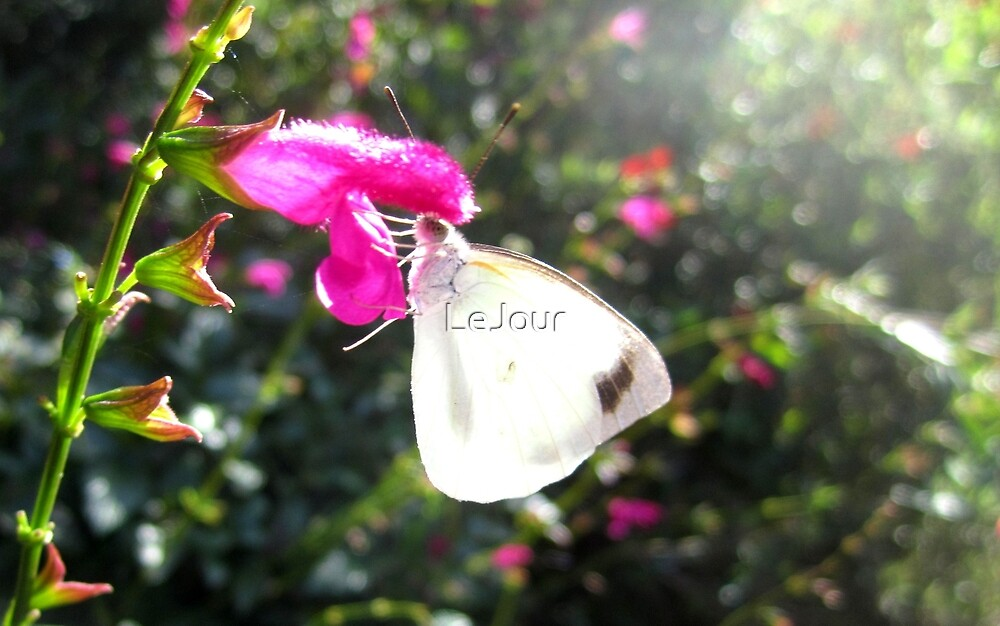 Pearl White Butterfly on pink flower by LeJour