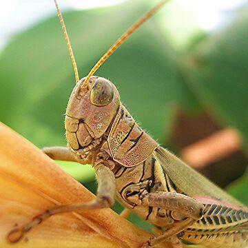 Portrait of a Grasshopper by jillspring