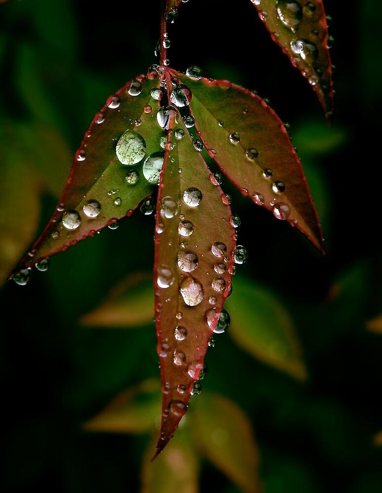 Water Leaf by Christian von Schleicher