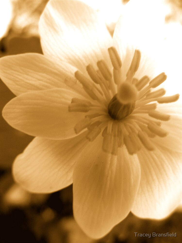 Flower by Tracey Bransfield