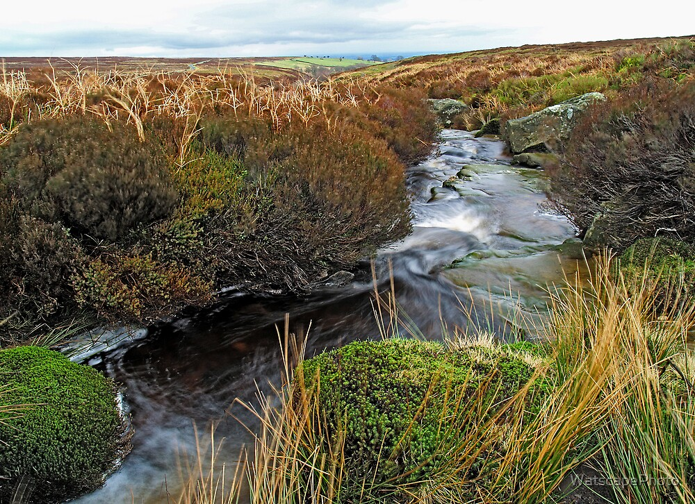 Hambleton Dyke by WatscapePhoto