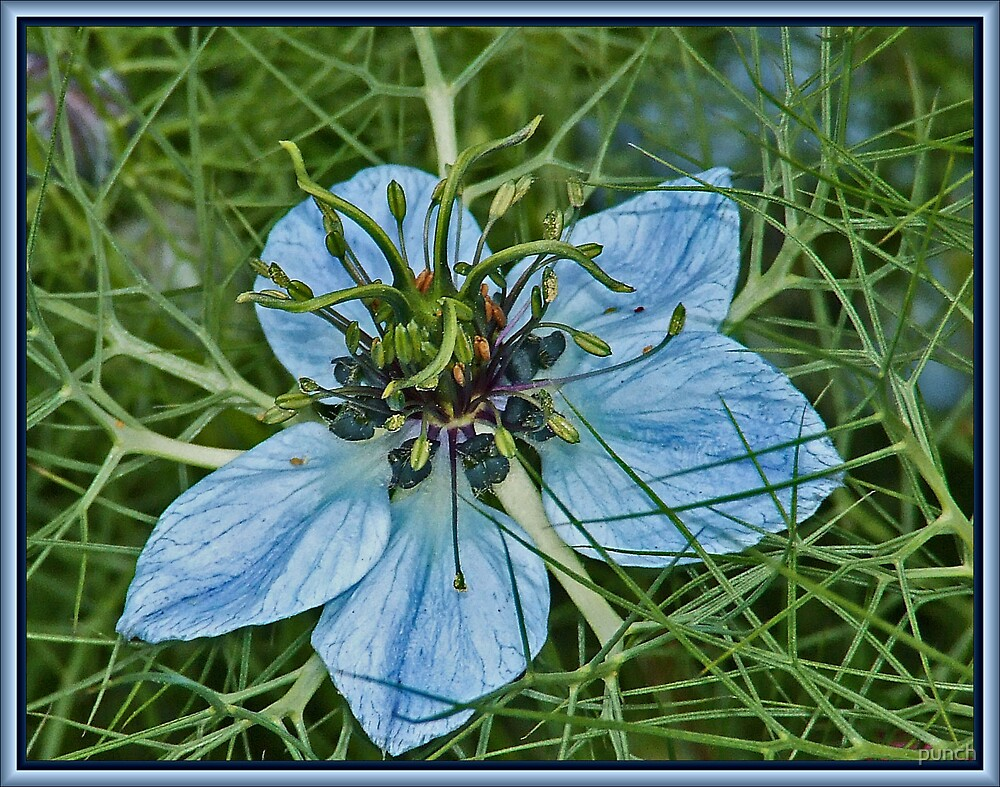 Blue Flower by punch