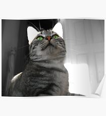 Cat In the Hall Poster