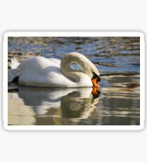 Swan reflection Sticker