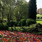 Spring has begun by annalisa bianchetti