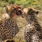 Cheetah Kiss by Philip Alexander