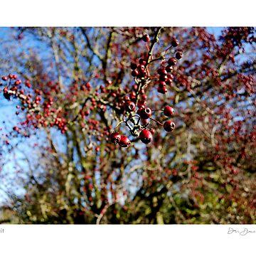 Fen Fruit by dandonovan