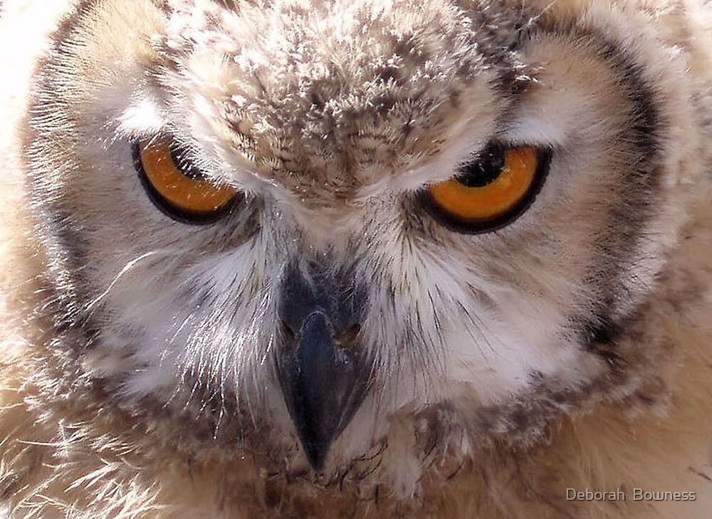 Intense Stare by Deborah  Bowness