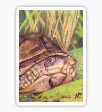 Three Toed Box Turtle Sticker