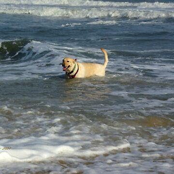 Doggie Dip by Amedori