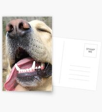 Happy - Goofy Labrador Portrait Postcards