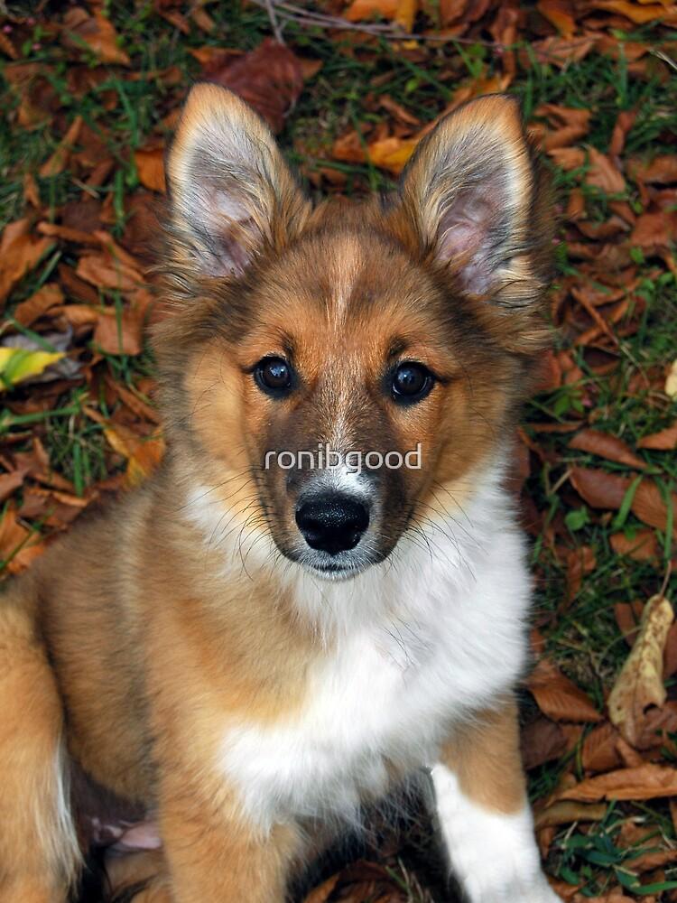 Australian Pup by ronibgood