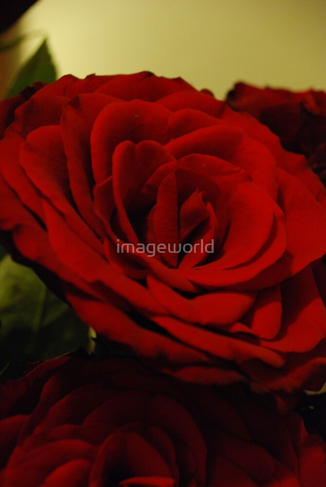 The Colour red by imageworld