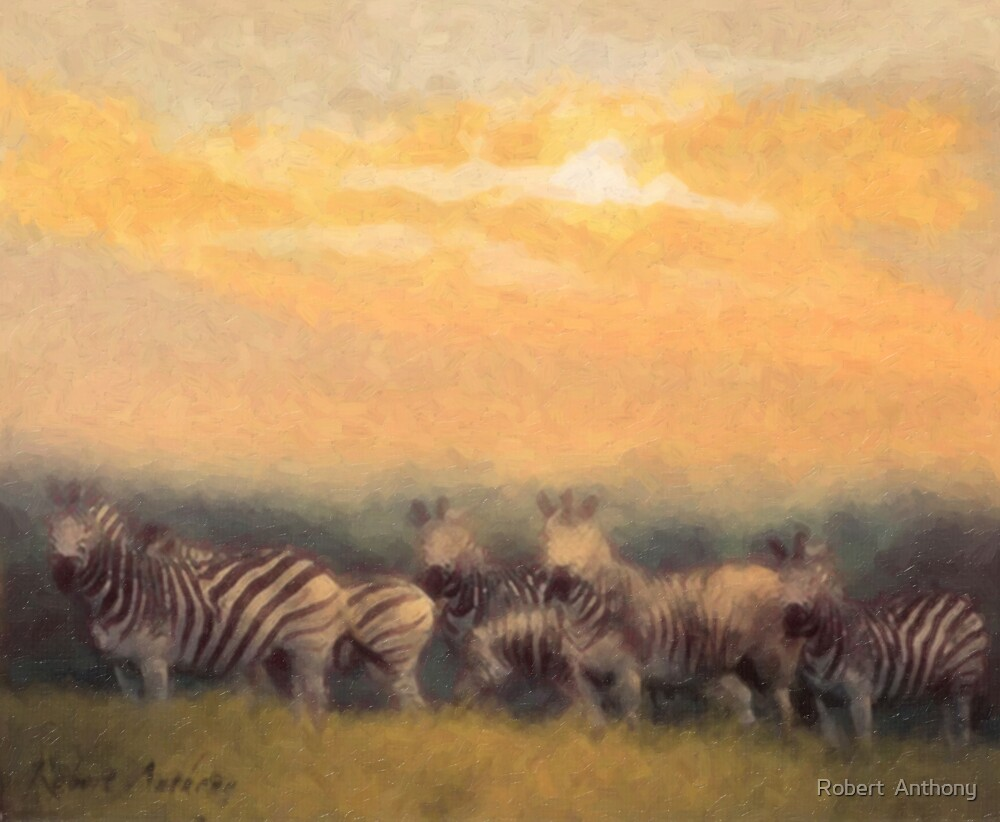 Zebra  by Robert  Anthony
