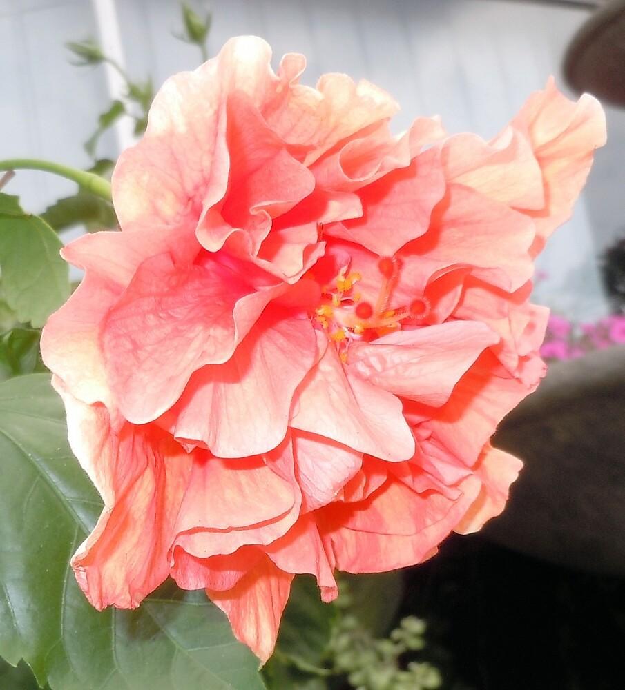 The orange flower#2 by James Gibbs