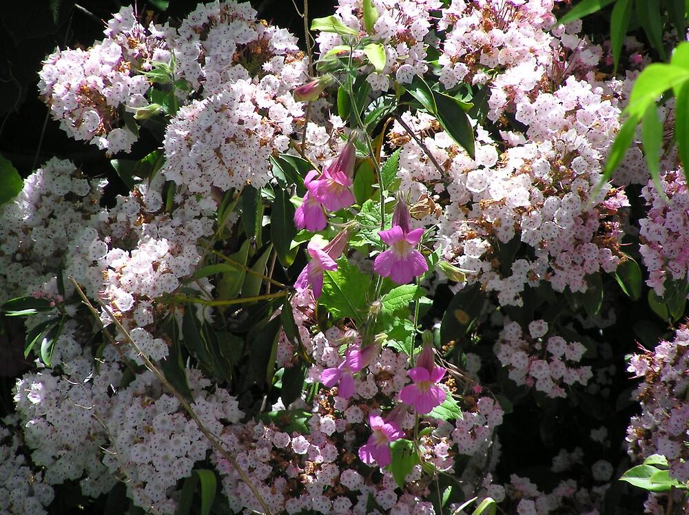 pretty flowers by bubblewrap